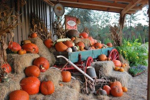 pumpkinwagon2